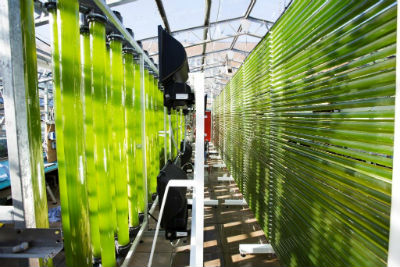 Algal Cultivation facility at Swansea University for web