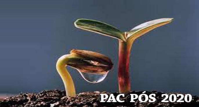 pac1531