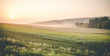 agricultura regenarativa