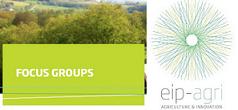 FocusGroups EIP